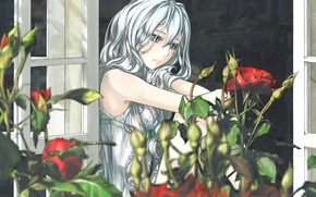 Picture flowers, roses, Girl, window