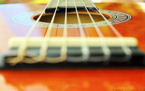 Picture macro, orange, guitar, venitomusic