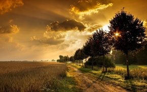 Picture road, sunset, through trees, wheat fields