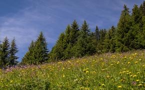 Picture trees, flowers, Switzerland, meadow, Switzerland, Eggenschwand