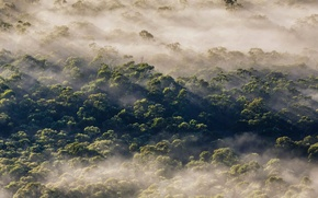Picture forest, trees, fog, Australia, New South Wales