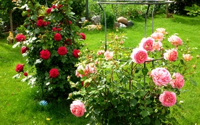 Picture greens, grass, flowers, roses, garden, red, pink, the bushes