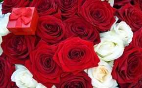 Picture flowers, bouquet, box, offer, red, roses