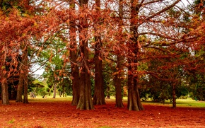 Picture autumn, trees, branches, Park