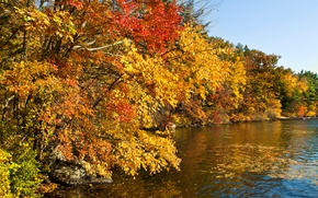 Picture autumn, forest, leaves, the sun, trees, river, stones, yellow