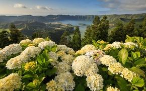 Picture flowers, mountains, Portugal, Portugal, hydrangeas, Azores, Ponta Delgada, Ponta Delgada, Azores, Mosteiros, Mosteiros, Lagoon of …