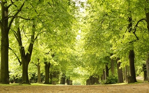Picture green, park, spring, alley