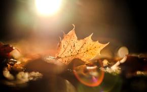 Picture autumn, leaves, the sun, macro, glare, background, widescreen, Wallpaper, blur, wallpaper, leaves, widescreen, background, full …