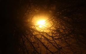 Picture light, night, the city, tree, lantern