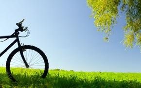 Picture greens, the sky, grass, leaves, bike, background, tree, widescreen, Wallpaper, mood, wheel, meadow, wallpaper, widescreen, …