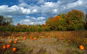 Picture field, autumn, the sky, clouds, trees, colors, pumpkin, Nature, sky, trees, field, autumn, clouds, pumpkin, …