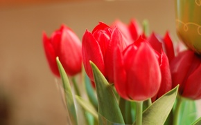 Picture leaves, macro, flowers, background, widescreen, Wallpaper, petals, Bud, tulips, red, wallpaper, red, rose, leaves, flowers, …