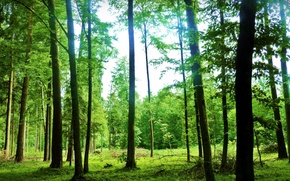 Picture summer, the sky, rays, landscape, nature, green, forest. trees