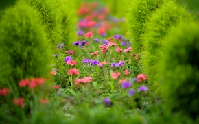 Picture flowers, plant, garden, flowerbed