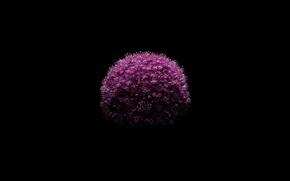Picture Black, Apple, Flower, iOS 8, iPhone