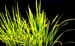 Picture Grass, contrast