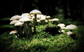Wallpaper macro, mushrooms