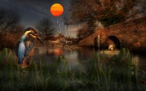Picture grass, the sun, sunset, birds, bridge, rendering, tree, shore, the evening, art, twilight, pond, Kingfisher, …