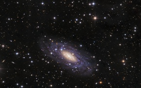 Picture Dove, galaxy, spiral, in the constellation, NGC 2090