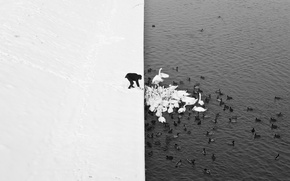 Picture Nature, Minimalism, Lake, Snow, People, Swans
