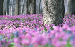 Wallpaper blur, flowers, tree, forest, glade