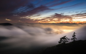 Wallpaper fog, the sky, sunset