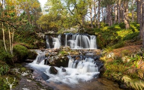 Picture forest, trees, stream, stones, waterfall, Scotland, Cairngorms