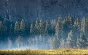 Wallpaper summer, grass, light, trees, nature, fog, rock, mountain, morning
