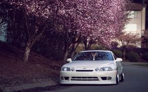 Picture car, white, trees, street, Japan, Sakura, lexus, japan, tuning, Lexus, hellaflash, sc 400