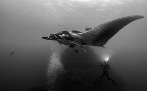 Picture the ocean, diver, Manta rod
