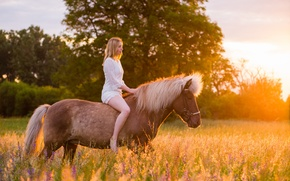 Picture horse, girl, nature