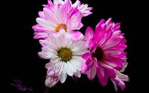 Picture macro, flowers, background