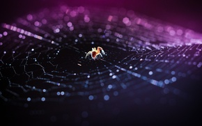 Picture macro, web, spider, bokeh