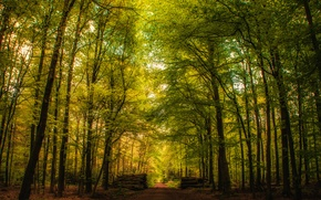 Picture road, forest, trees, Germany