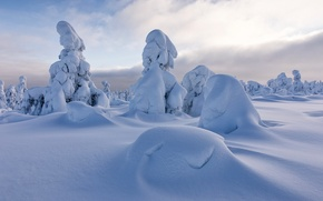 Picture winter, snow, trees, the snow, Finland, Finland, Lapland, Lapland, Sodankylä, Sodankyla