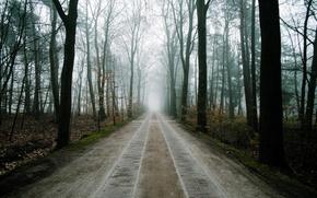 Picture road, forest, landscape, fog