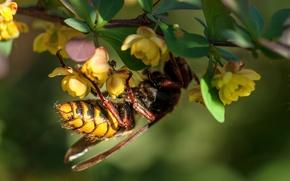 Picture flowers, macro, bokeh, wasp, leaf, worm