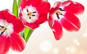 Picture leaves, flowers, bright, beauty, bouquet, petals, tulips, pink, pink, flowers, beauty, bouquet, bright, Tulips