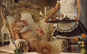 Picture cat, girl, the situation, chair, lunch, sausage, servants