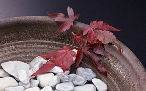 Picture Leaves, Stones, Vase
