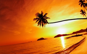 Picture palm trees, beach, palms, shore, sea, weeping palm, Mac island, Mak island, Tropical beach sunset, ...