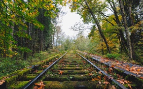 Picture autumn, railway, abandoned, fall, railroad, decay