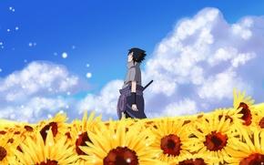 Picture is, naruto, art, Sasuke, a field of sunflowers