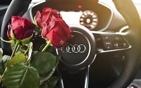 Picture macro, flowers, Audi, roses
