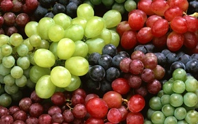 Picture Grapes, red grapes, white grapes, blue grape