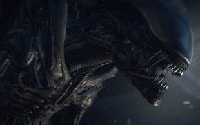 Picture Monster, Stranger, Monster, Hunter, Alien, Xenomorph, Creative Assembly, PS4, Sega, Xbox One, Alien, Alien: Isolation
