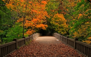 Picture autumn, forest, leaves, trees, bridge, nature, Park, view, walk, forest, trees, nature, bridge, park, autumn, …