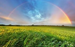 Picture summer, grass, landscape, rainbow, space