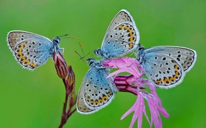 Picture flower, nature, butterfly, moth