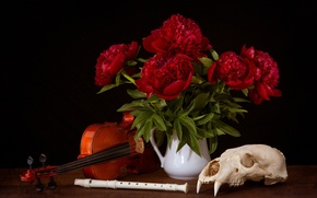 Picture violin, skull, peonies, the flute